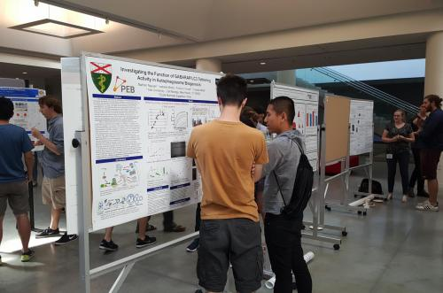 Cell Biology/PEB student presenting a poster on his research on autophagosome biogenesis at the 2016 iPoLS meeting..