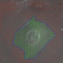 Traction force microscopy